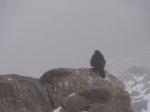 2011-08 Mont Blanc - Bird in bad weather