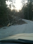 The Storm - A broken tree